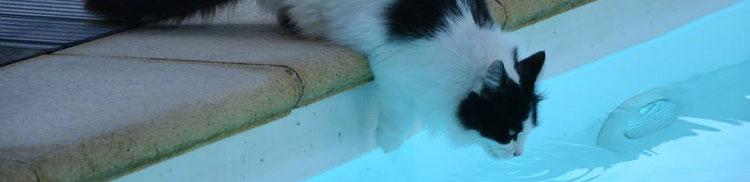 Gatos y piscina cubierta piscina seguridad mascotas abripool