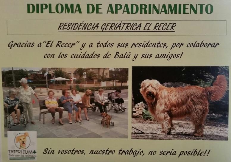 Certificado de apadrinamiento del perro Balú por la residencia geriátrica El Recer de Castelldefels