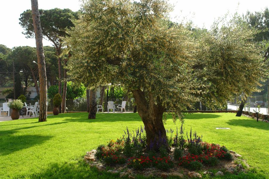 Un jardín bien cuidado