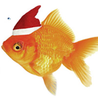 El simpático y divertido pez de Rec Fish vuelve a visitar nuestra agencia para felicitar las Navidades. En este proyecto se desarrolla la conceptualización de un formato online. Su envío se realizó mediante el módulo de newsletter