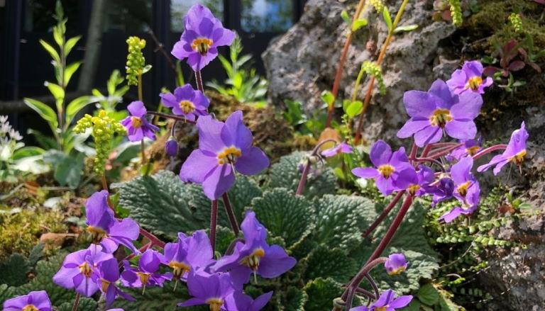 Disfruta de la flora única del norte leridano