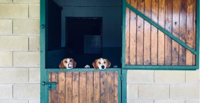 Residència i Guarderia Canina