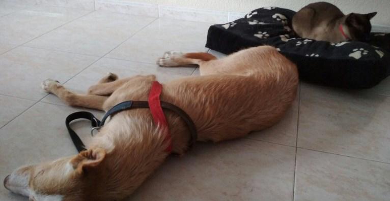 Etololgia Canina i Felina