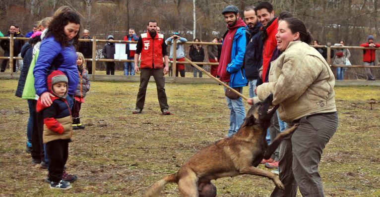 Exhibicions i Jornades canines